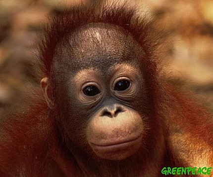 Aww - a baby orang-utan - a bit of light relief before the rest of this post.